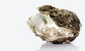 oyster with pearls